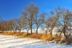arbres forestiers Photo stock