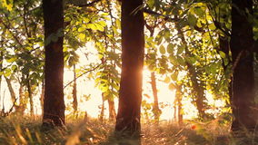 Arbres forestiers au coucher du soleil clips vidéos