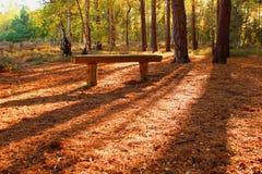 Arbres forestiers automnaux au coucher du soleil avec le banc Photo stock