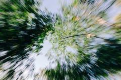 Arbres forestiers Branches supérieures Photo libre de droits