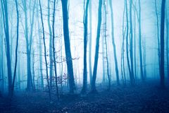 Arbres forestiers brumeux colorés bleu-foncé Image stock