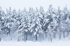 Arbres forestiers couverts dans la neige Photos stock