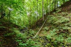 Arbres forestiers d'été Milieux en bois verts de lumi?re du soleil de nature Photo libre de droits