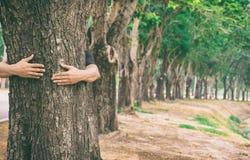 Arbres forestiers d'amour d'arbre d'étreinte d'homme de main de concept d'écologie Images stock