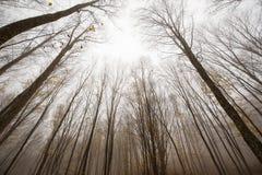 Arbres forestiers d'automne Images libres de droits