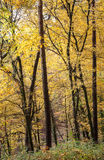 Arbres forestiers d'automne Photo stock