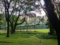 Arbres forestiers d'automne Milieux de nature photo stock
