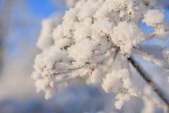 Arbres forestiers de neige d'hiver Photos libres de droits
