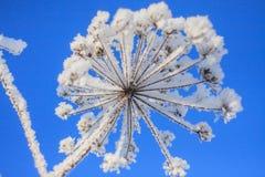 Arbres forestiers de neige d'hiver Photo libre de droits