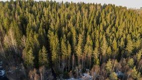 Arbres forestiers de r?gion sauvage dans la vue ensoleill?e de paysage de journ?e de printemps images stock
