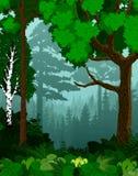 Arbres forestiers de vert de région boisée de vecteur éclairés à contre-jour illustration de vecteur