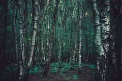Arbres forestiers denses photo stock
