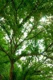 Arbres forestiers, feuilles de vert et fond de lumière du soleil Photo libre de droits