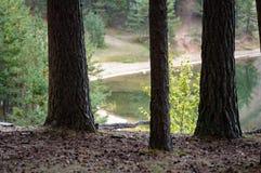 arbres forestiers foncés et déprimés à fin de soirée Image libre de droits