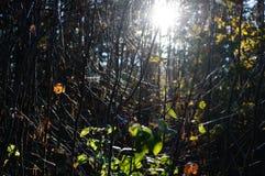 arbres forestiers foncés et déprimés à fin de soirée Photo libre de droits