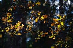 arbres forestiers foncés et déprimés à fin de soirée Photo stock