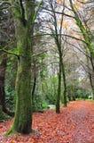 Arbres forestiers le long d'un automne f image libre de droits