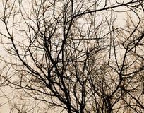 Arbres forestiers milieux en bois noirs et blancs de nature Photos stock