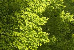 Arbres forestiers verts photographie stock libre de droits