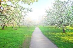 Arbres fruitiers au-dessus de ciel bleu lumineux photographie stock libre de droits