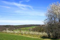 Arbres fruitiers complètement des fleurs au printemps dans l'Eifel Photographie stock