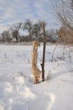Arbres fruitiers protecteurs des dommages animaux en hiver Photo stock