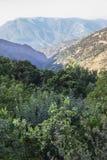Arbres fruitiers surchargés à la région d'Alpujarras, Espagne Image stock