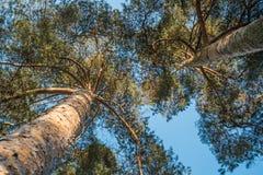 Arbres gentils avec le ciel un jour ensoleillé Photo libre de droits
