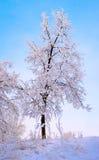 Arbres givrés au matin de l'hiver Photographie stock libre de droits