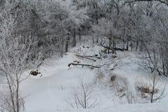 Arbres givrés autour de rivière congelée sous la neige Photographie stock
