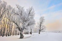 Arbres givrés d'hiver Images libres de droits