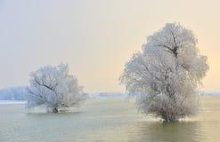 Arbres givrés d'hiver Photographie stock libre de droits