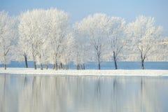 Arbres givrés d'hiver Photos stock