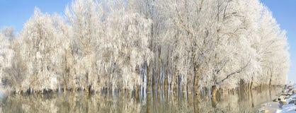 Arbres givrés d'hiver Images stock