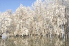 Arbres givrés d'hiver Photo libre de droits