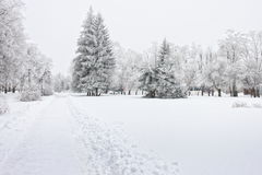 Arbres givrés dans la ville dans le jour d'hiver froid Image libre de droits