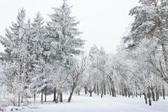 Arbres givrés dans la ville dans le jour d'hiver froid Photographie stock libre de droits