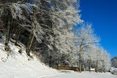 Arbres givrés un jour froid d'hiver Photographie stock libre de droits