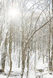 arbres glacials Photo stock