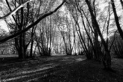 Arbres grands dans un bois au coucher du soleil, projetant de longues ombres sur le g Photos libres de droits