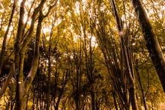 Arbres grands et lumière du soleil sur la forêt photos stock