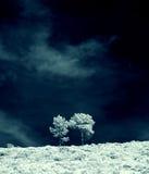 Arbres infrarouges Images libres de droits