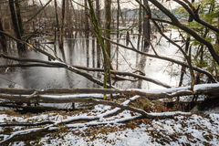 Arbres inondés dans l'hiver Photos stock