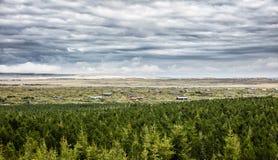 Arbres islandais coniféres Images stock