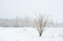 Arbres isolés congelés en parc ou forêt avec la neige et glace le jour brumeux froid d'hiver image libre de droits