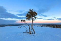 Arbres isolés dans la neige au fond d'hiver de coucher du soleil de lever de soleil Photos stock