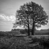 2 arbres isolés deviennent 1 Photos stock