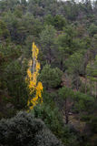 Arbres jaunes Photo stock