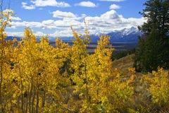 Arbres jaunes d'Aspen au-dessus de vallée Photographie stock libre de droits