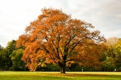 Arbres jaunes d'automne en parc Images stock